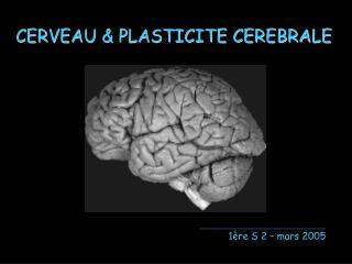 CERVEAU & PLASTICITE CEREBRALE