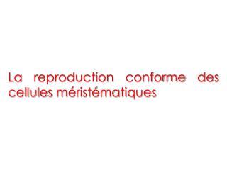 La reproduction conforme des cellules méristématiques