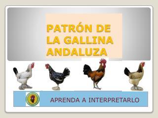 PATR N DE LA GALLINA ANDALUZA