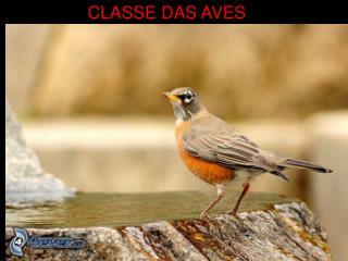 CLASSE DAS AVES