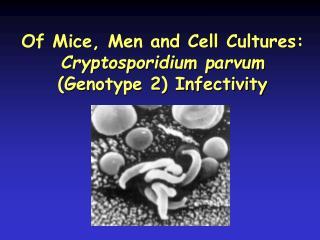 Of Mice, Men and Cell Cultures:  Cryptosporidium parvum  (Genotype 2) Infectivity