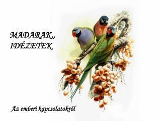 MADARAK,, IDÉZETEK