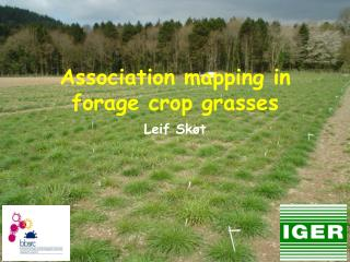 Association mapping in forage crop grasses