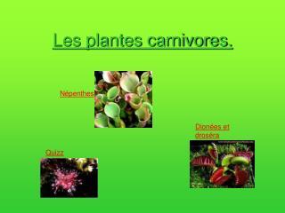 Les plantes carnivores.