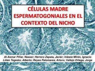 CÉLULAS MADRE ESPERMATOGONIALES EN EL CONTEXTO DEL NICHO