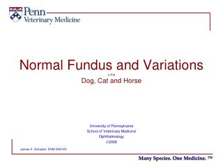 Normal Fundus and Variations in the Dog, Cat and Horse