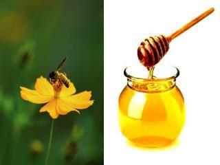 De la plante au pot de miel