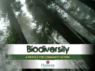 A PROFILE FOR COMMUNITY ACTION