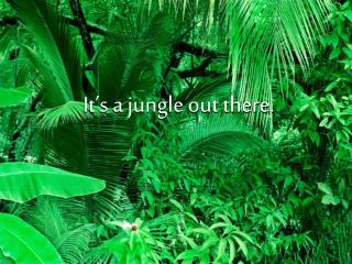 It's a jungle out there.
