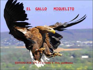 EL  GALLO   MIGUELITO