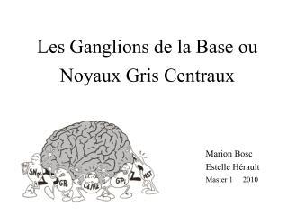 Les Ganglions de la Base ou Noyaux Gris Centraux