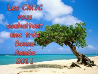 Les CM1C vous souhaitent une très Bonne Année  2011