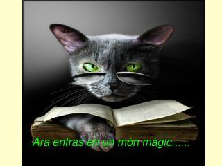 Ara entras en un món màgic......