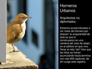 Horneros Urbanos Arquitectos no diplomados .