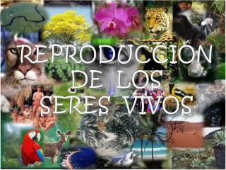 REPRODUCCI�N  DE   LOS SERES   VIVOS