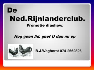 De Ned.Rijnlanderclub.                 Promotie diashow. Nog geen lid, geef U dan nu op