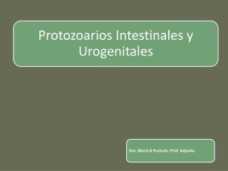 Protozoarios    (unicelulares)