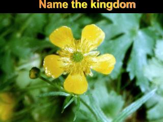Name the kingdom