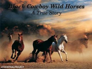 Black Cowboy Wild Horses A True Story
