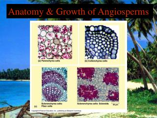 Anatomy & Growth of Angiosperms