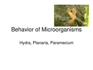 Behavior of Microorganisms