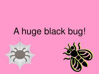 A huge black bug!