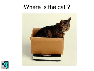 Where is the cat ?