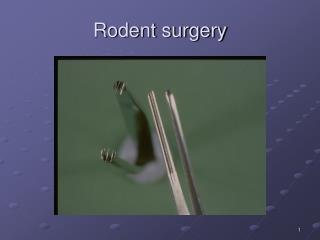 Rodent surgery