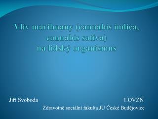 Vliv marihuany ( cannabis indica ,  cannabis sativa )  na lidský organismus
