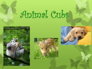 Animal Cubs