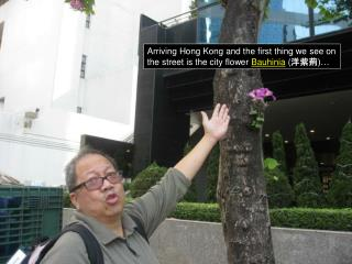 Arriving Hong Kong and the first thing we see on the street is the city flower  Bauhinia  ( 洋紫荊 )…