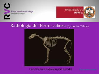 Radiolog�a del Perro: cabeza  (by Louise White)