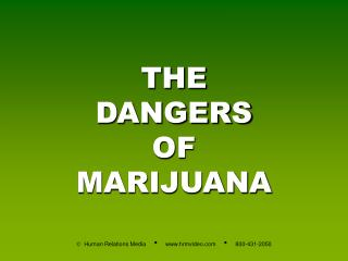 THE DANGERS OF MARIJUANA