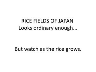 RICE FIELDS OF JAPAN  Looks  ordinary enough... But watch as the rice grows.