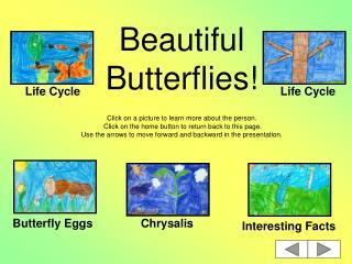 Beautiful Butterflies!