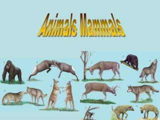 Animals Mammals