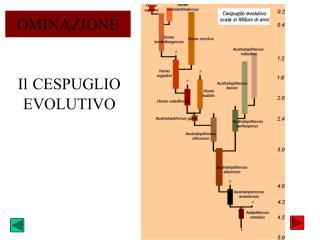 Il CESPUGLIO EVOLUTIVO
