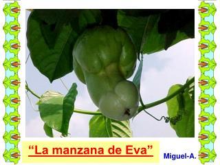 """""""La manzana de Eva"""""""
