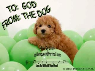TO: GOD  FROM: THE DOG