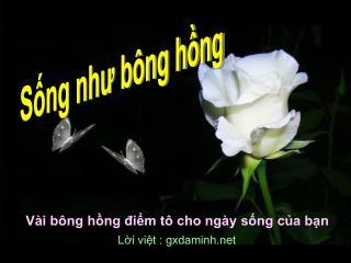 Vài bông hồng điểm tô cho ngày sống của bạn