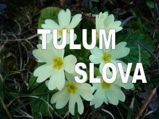 TULUM           SLOVA