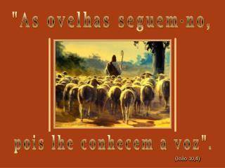 """""""As ovelhas seguem-no,"""