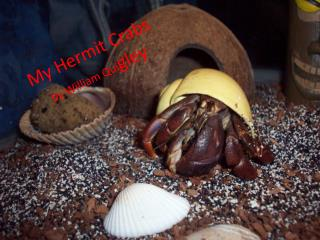 My Hermit Crabs by William Qui gley