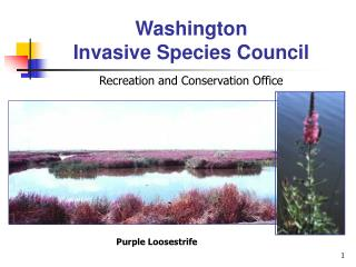 Washington  Invasive Species Council