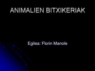 ANIMALIEN BITXIKERIAK