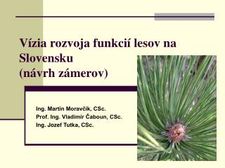 Vízia rozvoja funkcií lesov na Slovensku  (návrh zámerov)