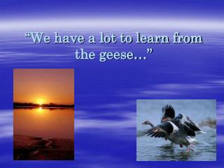 """We have a lot to learn from the geese…"""