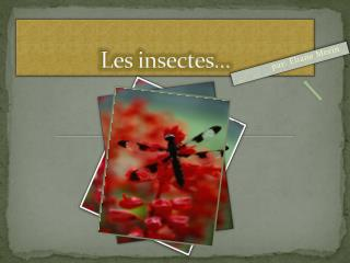 Les insectes…