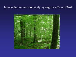 Intro to the co-limitation study: synergistic effects of N+P