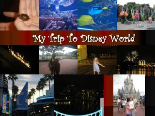 My Trip To Disney World